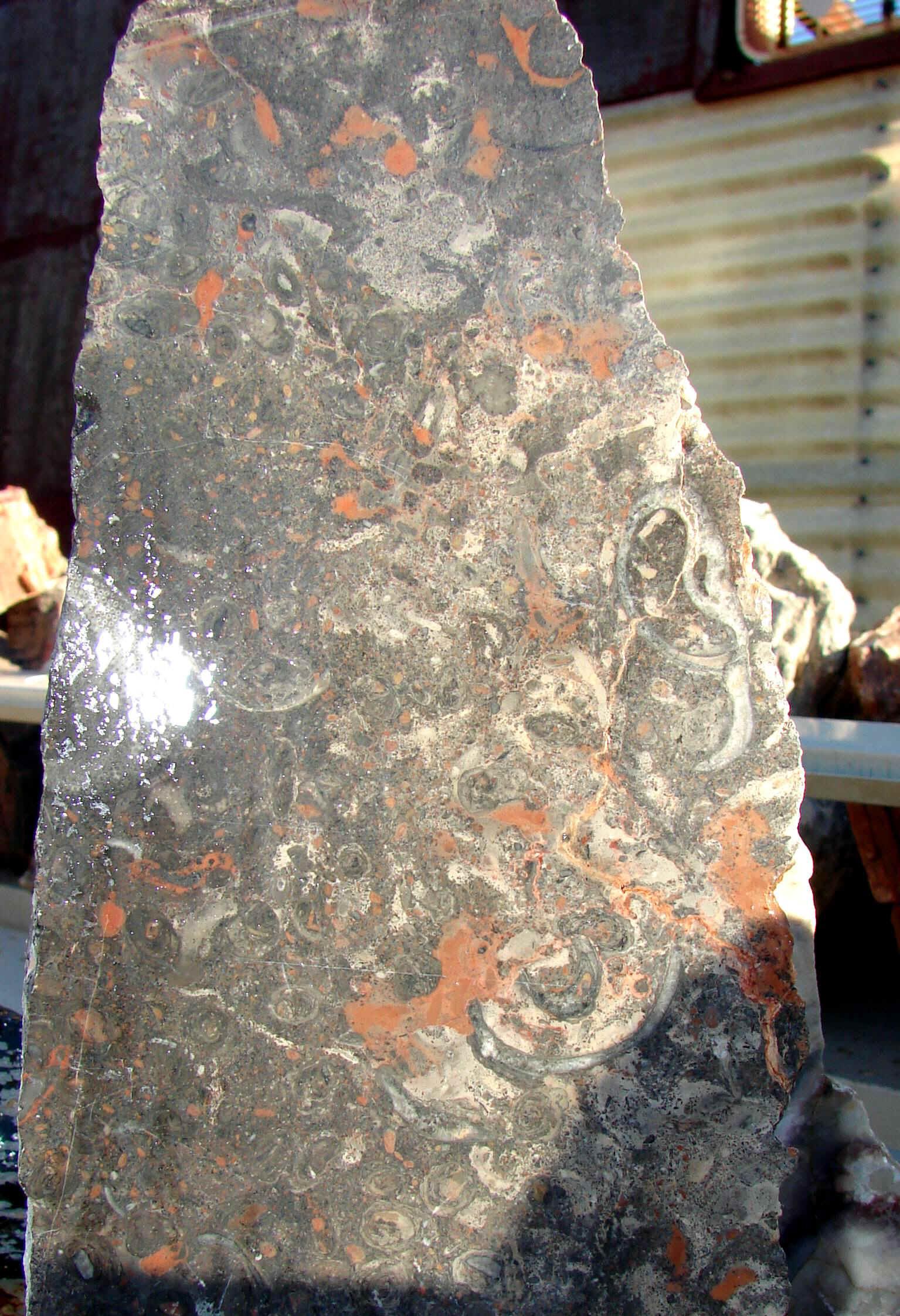 http://www.rockshops.net/fossil.jpg (807370 bytes)