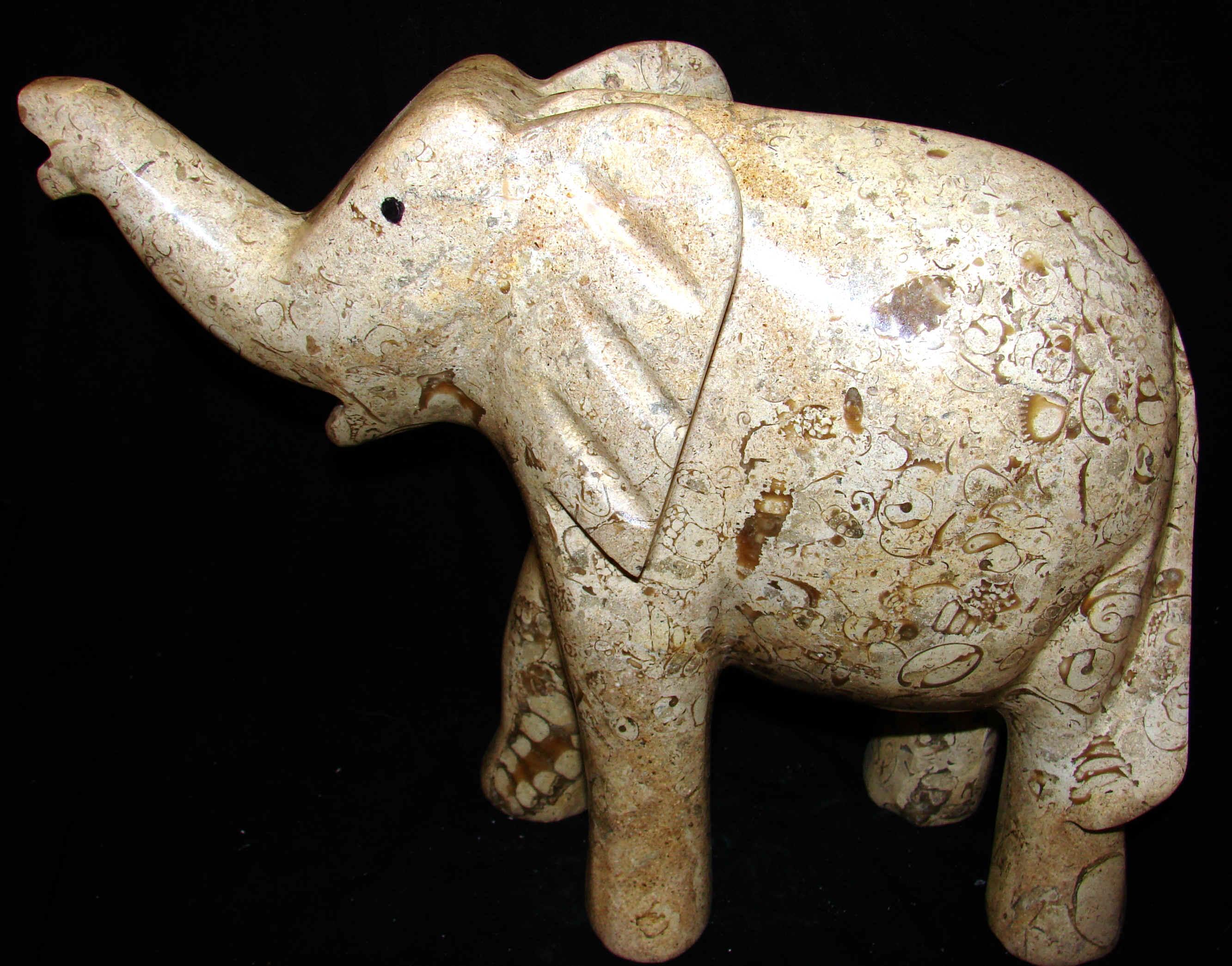 large_elephant.jpg (582341 bytes)